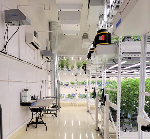 cannabis grow room with VaporDry systems