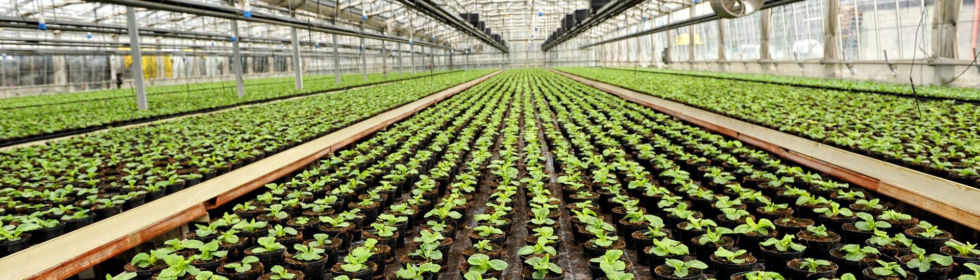 Greenhouse Humidity Control